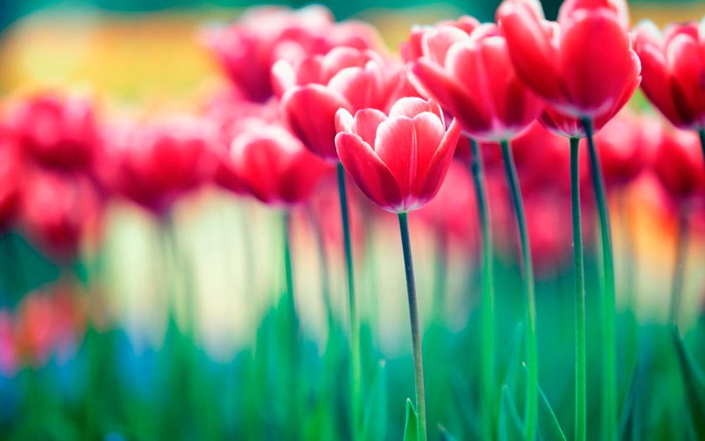 Imágenes de flores lindas