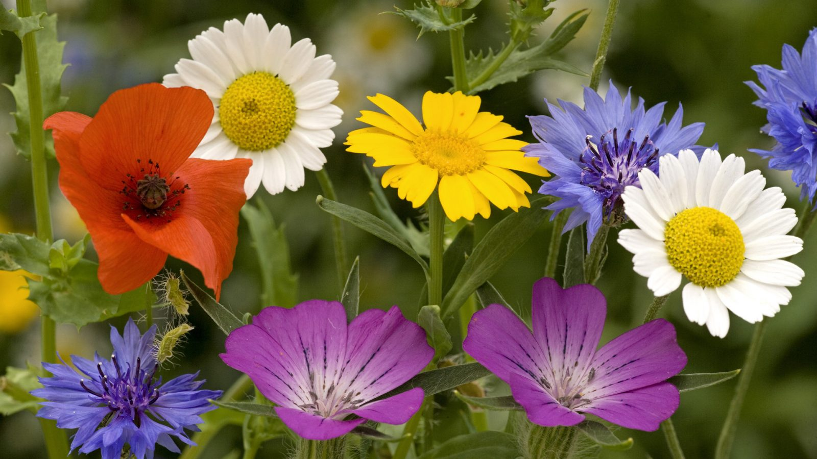 Imágenes de flores que enamorar