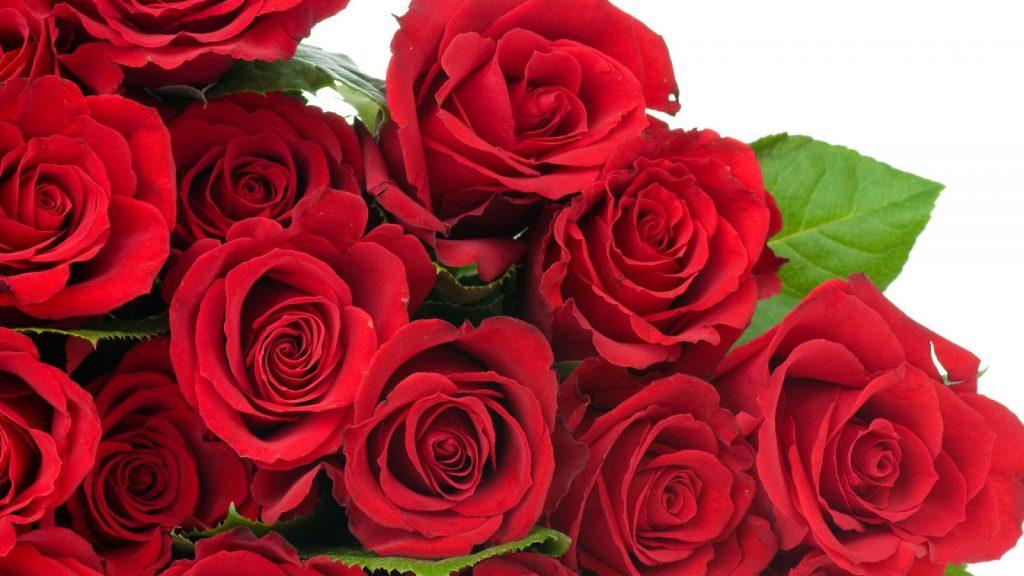 Imágenes de rosas en racimos