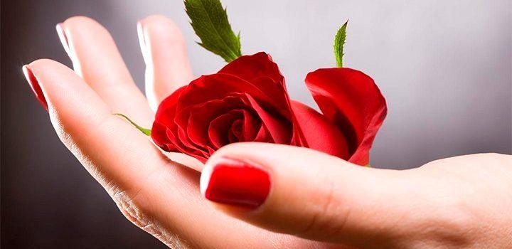 Imágenes de rosas hermosas