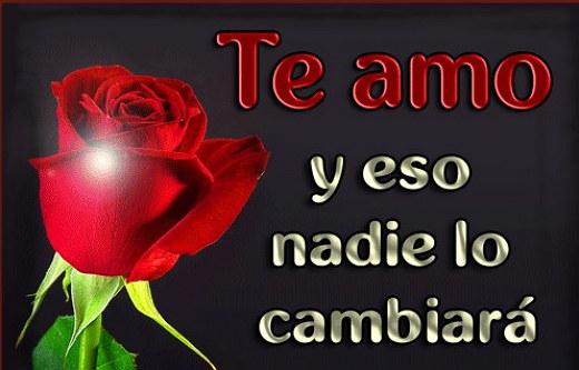 Rosas Con Frases Para Dedicar A Mi Gran Amor Imagenes De Amor