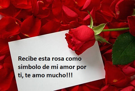 Imágenes con rosas de amor para compartir