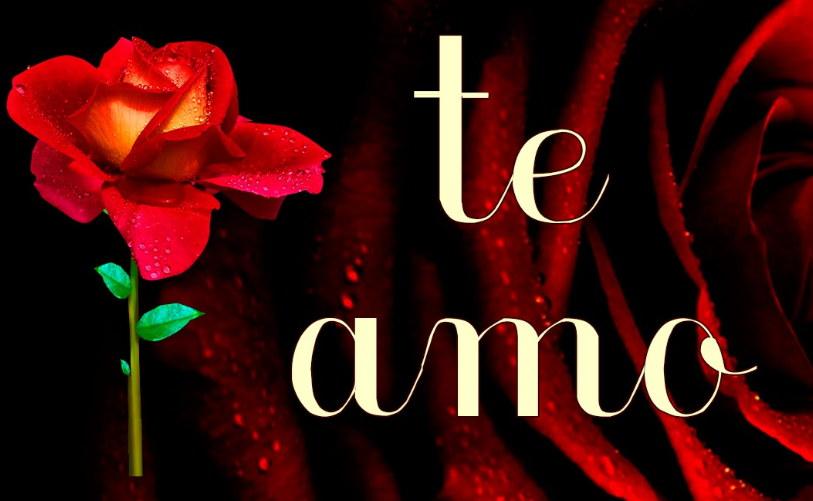 frase te amo y con rosa muy linda