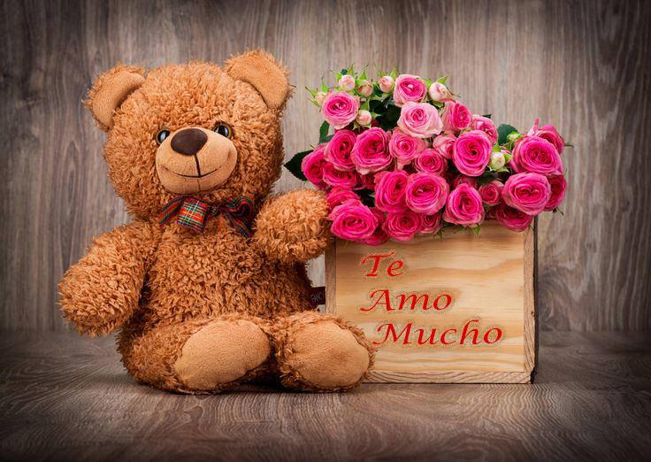 oso tierno con te amo