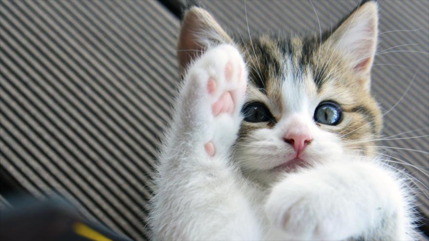 imagenes de gatos tiernos para facebook